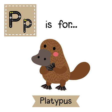 platypus: P letter tracing. Standing Platypus. Cute children zoo alphabet flash card. Funny cartoon animal. Kids abc education. Learning English vocabulary. illustration.