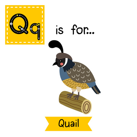 wood log: Q letter tracing. Quail bird perching on wood log. Cute children zoo alphabet flash card. Funny cartoon animal. Kids abc education. Learning English vocabulary. illustration. Illustration