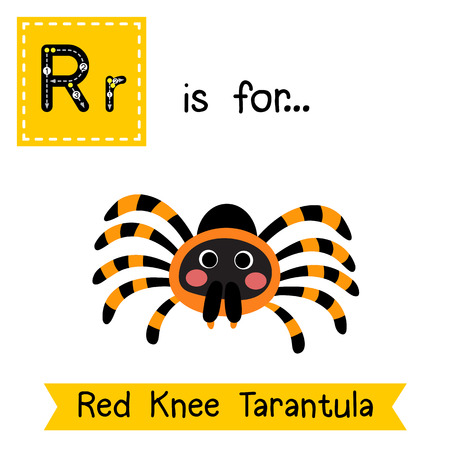 tarantula: R letter tracing. Red Knee Tarantula. Cute children zoo alphabet flash card. Funny cartoon animal. Kids abc education. Learning English vocabulary. illustration.