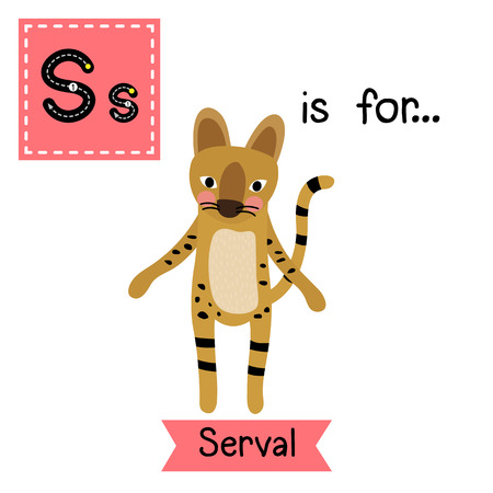 cat s: S letter tracing. Serval Cat. Cute children zoo alphabet flash card. Funny cartoon animal. Kids abc education. Learning English vocabulary. illustration. Illustration