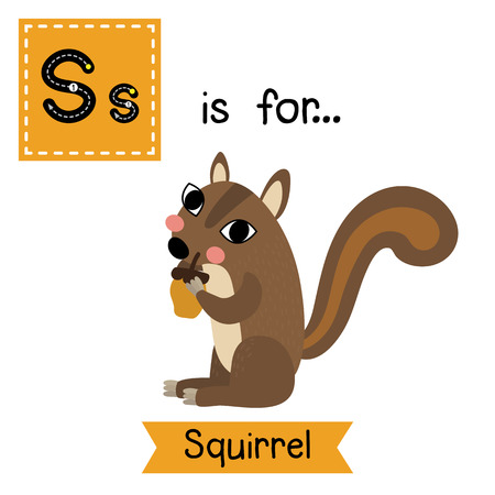 S letter tracing. Squirrel holding nut. Cute children zoo alphabet flash card. Funny cartoon animal. Kids abc education. Learning English vocabulary.  illustration.