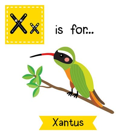 cute children: X letter tracing. Xantus Hummingbird perching on branch. Cute children zoo alphabet flash card. Funny cartoon animal. Kids abc education. Learning English vocabulary. illustration.