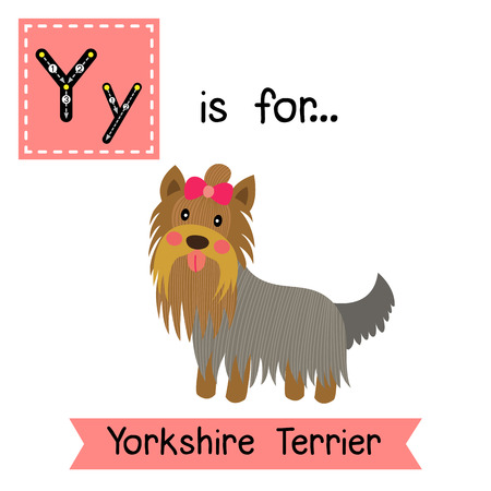 cute children: Y letter tracing. Yorkshire Terrier dog. Cute children zoo alphabet flash card. Funny cartoon animal. Kids abc education. Learning English vocabulary. illustration.