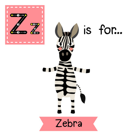 Z letter tracing. Zebra standing on two legs. Cute children zoo alphabet flash card. Funny cartoon animal. Kids abc education. Learning English vocabulary. illustration. Illustration