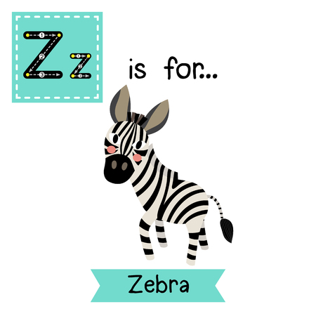 equid: Z letter tracing. Zebra. Cute children zoo alphabet flash card. Funny cartoon animal. Kids abc education. Learning English vocabulary. Vector illustration. Illustration