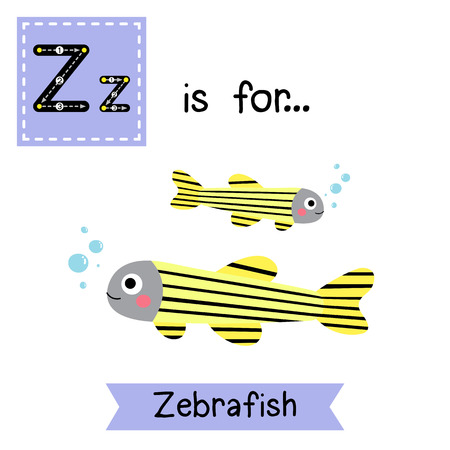 zebrafish: Z letter tracing. Zebrafish. Cute children zoo alphabet flash card. Funny cartoon animal. Kids abc education. Learning English vocabulary. illustration.