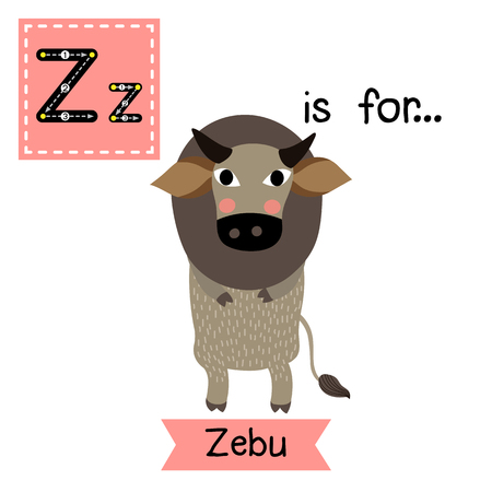 cute children: Z letter tracing. Zebu standing on two legs. Cute children zoo alphabet flash card. Funny cartoon animal. Kids abc education. Learning English vocabulary. Vector illustration. Illustration