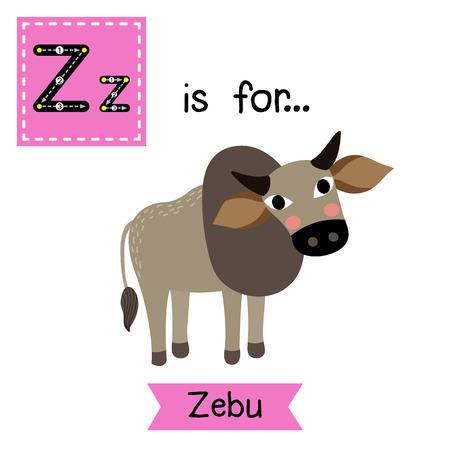 cute children: Z letter tracing. Zebu. Cute children zoo alphabet flash card. Funny cartoon animal. Kids abc education. Learning English vocabulary. illustration.