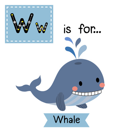 baleen whale: W letter tracing. Blue Whale with water splash. Cute children zoo alphabet flash card. Funny cartoon animal. Kids abc education. Learning English vocabulary. illustration. Illustration