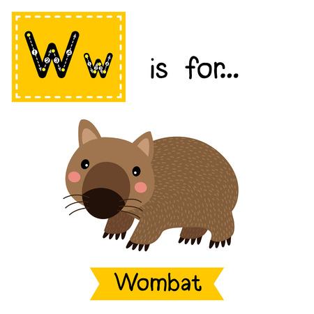 W trazado carta. Wombat feliz. Tarjeta de destello del alfabeto niños zoológico lindo. animales divertidos dibujos animados. Los niños de educación ABC. Aprender vocabulario Inglés. ilustración.