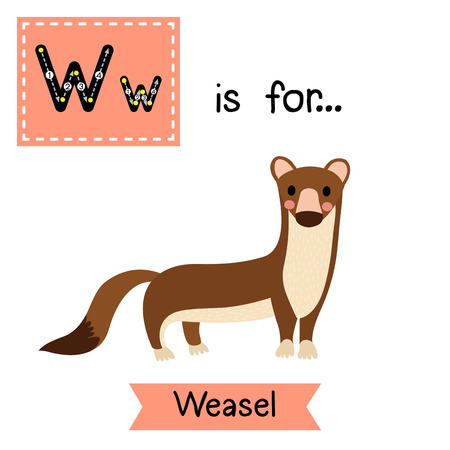 mink: W letter tracing. Weasel. Cute children zoo alphabet flash card. Funny cartoon animal. Kids abc education. Learning English vocabulary. illustration.