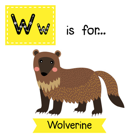 W letter tracing. Wolverine. Cute children zoo alphabet flash card. Funny cartoon animal. Kids abc education. Learning English vocabulary. illustration.