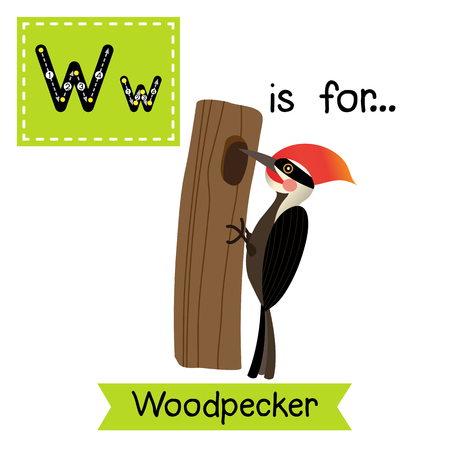 W letter tracing. Woodpecker bird perching tree. Cute children zoo alphabet flash card. Funny cartoon animal. Kids abc education. Learning English vocabulary. illustration. Illustration