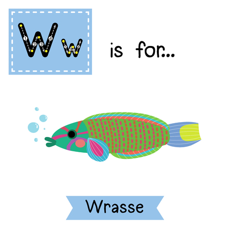 labridae: W letter tracing. Lunare or Lyretail Wrasse fish. Cute children zoo alphabet flash card. Funny cartoon animal. Kids abc education. Learning English vocabulary.  illustration.