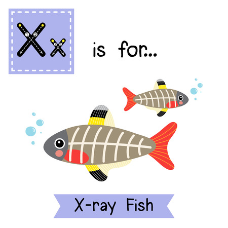 animals x ray: X letter tracing. X-ray Fish. Cute children zoo alphabet flash card. Funny cartoon animal. Kids abc education. Learning English vocabulary. illustration.
