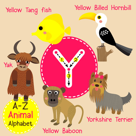 cute children: Y letter tracing. Yak. Yorkshire Terrier. Yellow Baboon. Yellow Billed Hornbill. Yellow Tang Fish. Cute children zoo alphabet flash card. Funny cartoon animal. Kids abc education. Learning English vocabulary. illustration.