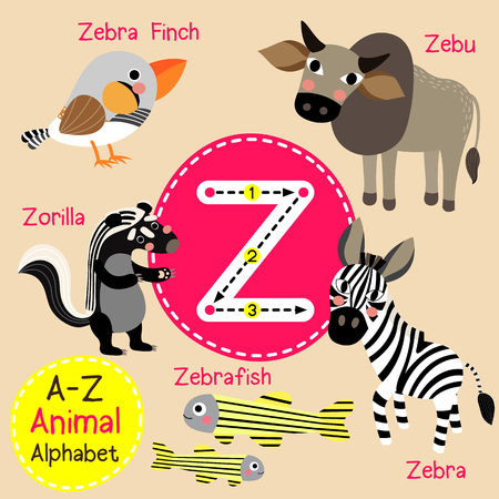Z letter tracing. Zebra. Zebu. Zorilla. Zebrafish. Zebra Finch. Cute children zoo alphabet flash card. Funny cartoon animal. Kids abc education. Learning English vocabulary. illustration.