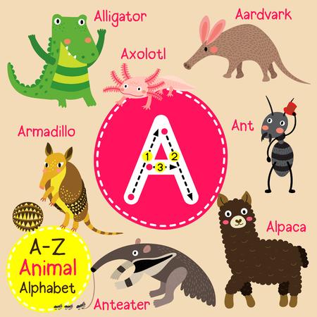 alpaca animal: A letter tracing. Ant. Aardvark. Armadillo. Alligator. Alpaca. Anteater. Axolotl. Cute children zoo alphabet flash card. Funny cartoon animal. Kids abc education. Learning English vocabulary. illustration. Illustration
