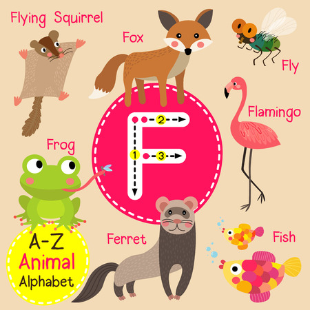 F letter tracing. Ferret. Fish. Flamingo. Fly. Flying Squirrel. Fox. Frog. Cute children zoo alphabet flash card. Funny cartoon animal. Kids abc education. Learning English vocabulary. Vector illustration. Illusztráció