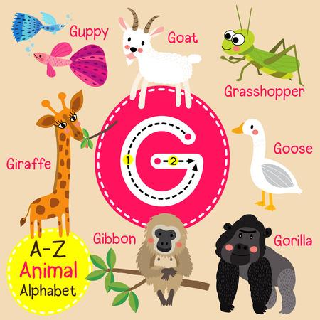 g giraffe: G letter tracing. Gibbon. Giraffe. Goat. Goose. Gorilla. Guppy. Grasshopper. Cute children zoo alphabet flash card. Funny cartoon animal. Kids abc education. Learning English vocabulary. illustration.