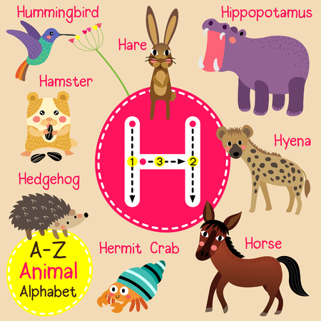 children crab: H letter tracing. Hare. Hedgehog. Hermit Crab. Hippopotamus. Horse. Hummingbird. Hyena. Cute children zoo alphabet flash card. Funny cartoon animal. Kids abc education. Learning English vocabulary. illustration. Illustration