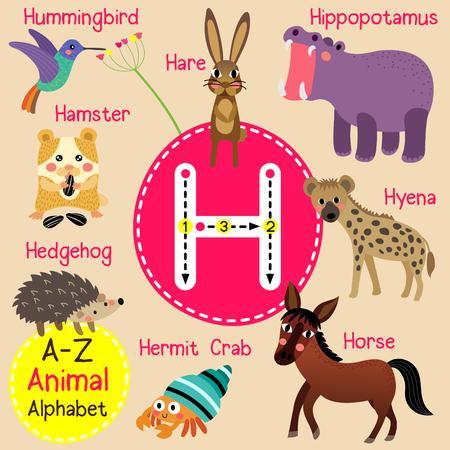 H letter tracing. Hare. Hedgehog. Hermit Crab. Hippopotamus. Horse. Hummingbird. Hyena. Cute children zoo alphabet flash card. Funny cartoon animal. Kids abc education. Learning English vocabulary. illustration. Illustration