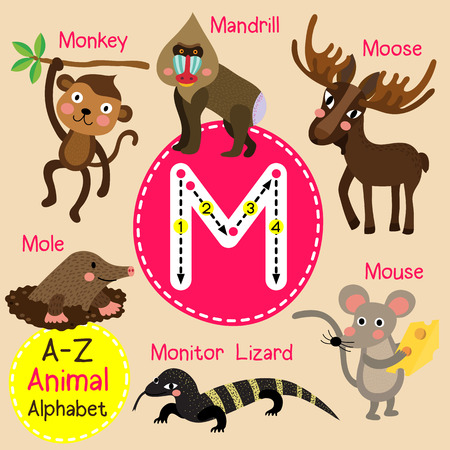 mandrill: M letter tracing. Monkey. Mouse. Mole. Monitor Lizard. Moose. Mandrill. Cute children zoo alphabet flash card. Funny cartoon animal. Kids abc education. Learning English vocabulary. illustration. Illustration