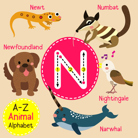 newt: N letter tracing. Narwhal. Newfoundland. Newt. Nightingale. Numbat. Cute children zoo alphabet flash card. Funny cartoon animal. Kids abc education. Learning English vocabulary. illustration.