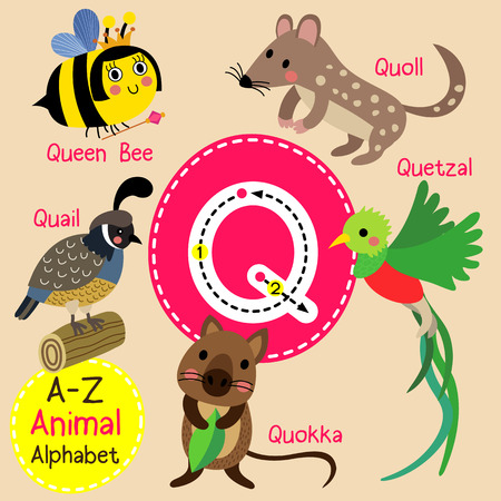 Q letter tracing. Quail. Queen Bee. Quetzal. Quokka. Quoll. Cute children zoo alphabet flash card. Funny cartoon animal. Kids abc education. Learning English vocabulary. illustration.