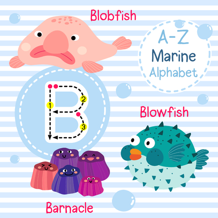B letter tracing. Blowfish. Blobfish. Barnacle. Cute children sea marine alphabet flash card. Funny cartoon animal. Kids abc education. Learning English vocabulary. illustration. Vektoros illusztráció
