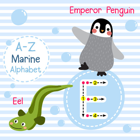 e card: E letter tracing. Emperor Penguin. Eel. Cute children sea marine alphabet flash card. Funny cartoon animal. Kids abc education. Learning English vocabulary. illustration.