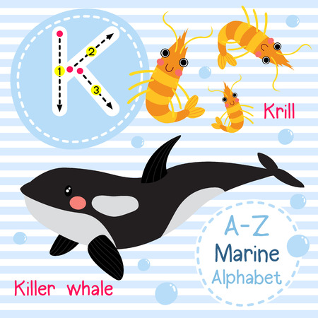 krill: K letter tracing. Killer whale. Krill. Cute children sea marine alphabet flash card. Funny cartoon animal. Kids abc education. Learning English vocabulary. illustration.