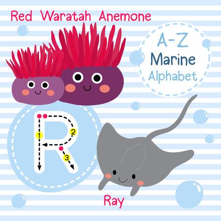 ray tracing: R letter tracing. Red Waratah Anemone. Ray. Cute children sea marine alphabet flash card. Funny cartoon animal. Kids abc education. Learning English vocabulary. illustration.