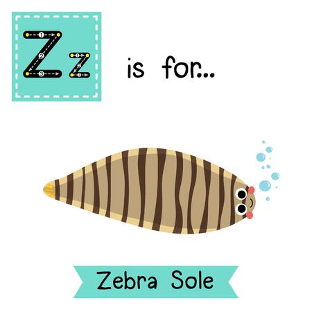 teach: Z letter tracing. Zebra Sole. Cute children zoo alphabet flash card. Funny cartoon animal. Kids abc education. Learning English vocabulary. Vector illustration.