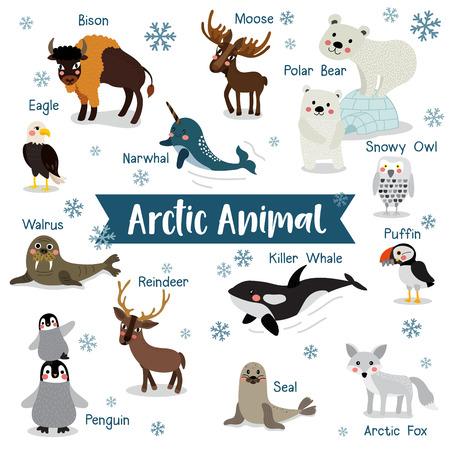 de dibujos animados de animales del Ártico en el fondo blanco con el nombre del animal. Pingüino, oso polar, reno. Morsa. Alce. Buho Nevado. Zorro ártico. Águila. Ballena asesina. Bisonte. Sello. Frailecillo. Narval. ilustración. Ilustración de vector
