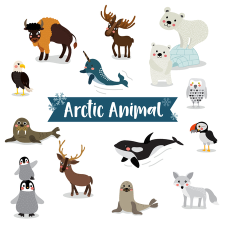 Arctic Animal cartoon on white background. Penguin, Polar Bear, Reindeer. Walrus. Moose. Snowy Owl. Arctic Fox. Eagle. Killer whale. Bison. Seal. Puffin. Narwhal. illustration.