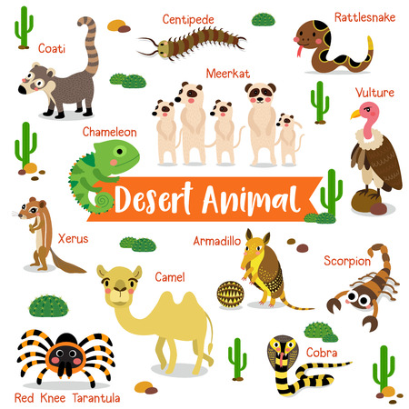 Desert Animal cartoon on white background with animal name. Camel. Cobra. Scorpion. Armadillo. Red Knee Tarantula. Chameleon. Meerkat. Vulture. Rattlesnake. Centipede. Xerus. Coati. illustration. Illustration