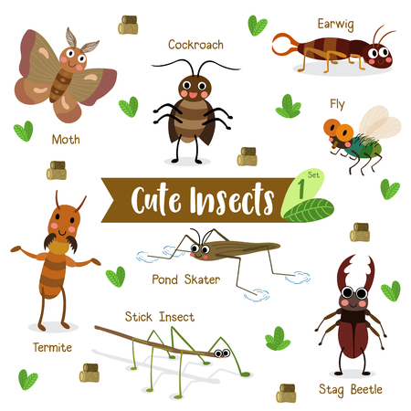 stick insect: Cute Insects Animal cartoon on white background with animal name. Fly. Cockroach. Pond Skater. Stick Insect. Moth. Termite. Earwig. Stag Beetle. Beetle.