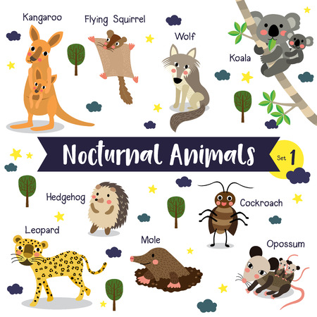 nocturnal: Nocturnal Animal cartoon on white layout.