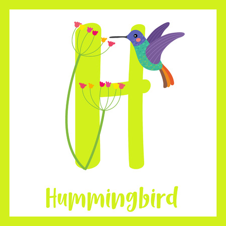 H letter vocabulary. Golden tailed sapphire Hummingbird getting nectar from a flower. Cute children ABC zoo alphabet flash card. Funny cartoon animal. Kids abc education. Learning English vocabulary. Vector illustration. Illustration