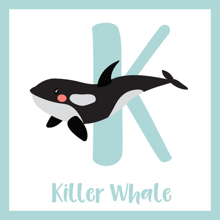 orcinus: K letter vocabulary. Killer whale orca. Cute children ABC zoo alphabet flash card. Funny cartoon animal. Kids abc education. Learning English vocabulary. Vector illustration. Illustration