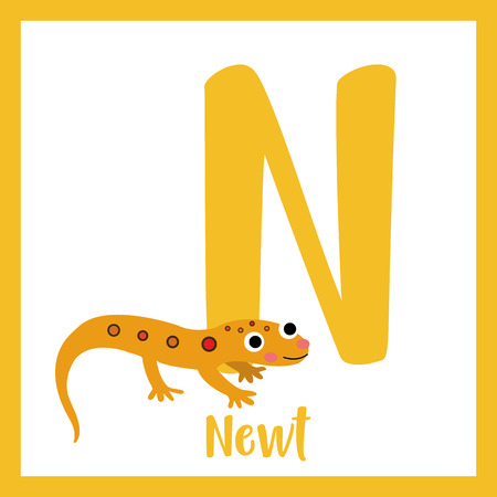 newt: N letter vocabulary. Eastern Red-spotted New. Cute children ABC zoo alphabet flash card. Funny cartoon animal. Kids abc education. Learning English vocabulary. Vector illustration.