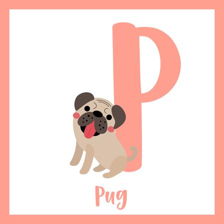 az: P letter vocabulary. Pug dog. Cute children ABC zoo alphabet flash card. Funny cartoon animal. Kids abc education. Learning English vocabulary. Vector illustration. Illustration