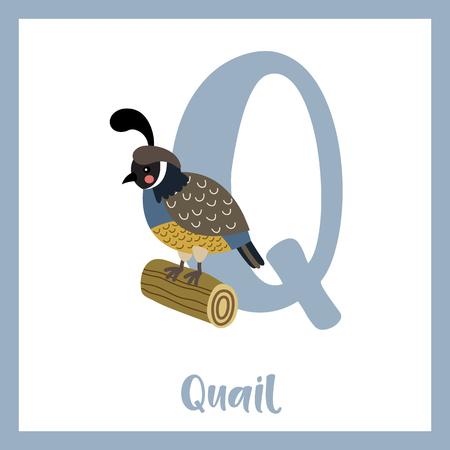Q letter vocabulary. Quail bird perching on wood log. Cute children ABC zoo alphabet flash card. Funny cartoon animal. Kids abc education. Learning English vocabulary. Vector illustration.