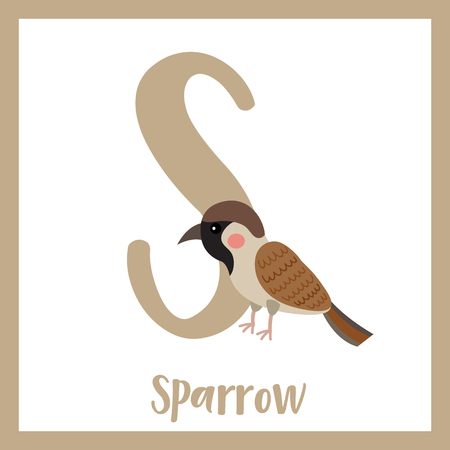 S letter vocabulary. House Sparrow bird perching branch. Cute children ABC zoo alphabet flash card. Funny cartoon animal. Kids abc education. Learning English vocabulary. Vector illustration.