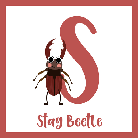 S letter vocabulary. Standing Stag Beetle. Cute children ABC zoo alphabet flash card. Funny cartoon animal. Kids abc education. Learning English vocabulary. Vector illustration.