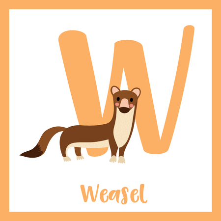 mink: W letter vocabulary. Weasel. Cute children ABC zoo alphabet flash card. Funny cartoon animal. Kids abc education. Learning English vocabulary. Vector illustration.