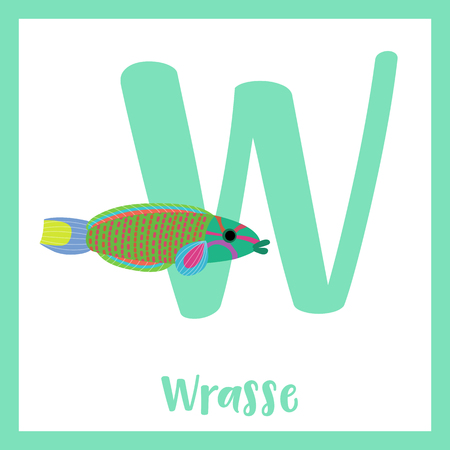 labridae: W letter vocabulary. Lunare or Lyretail Wrasse fish. Cute children ABC zoo alphabet flash card. Funny cartoon animal. Kids abc education. Learning English vocabulary. Vector illustration.