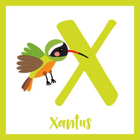 az: X letter vocabulary. Flying Xantus Hummingbird. Cute children ABC zoo alphabet flash card. Funny cartoon animal. Kids abc education. Learning English vocabulary. Vector illustration. Illustration