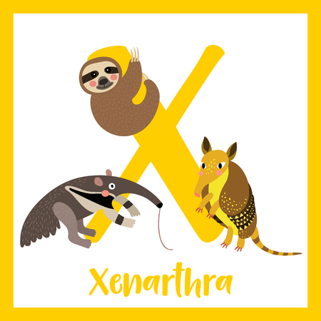 sloth: X letter vocabulary. Xenarthra. Cute children ABC zoo alphabet flash card. Funny cartoon animal. Kids abc education. Learning English vocabulary. Vector illustration. Illustration